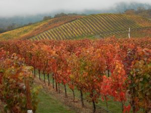 Autumn at Abacela Vineyard in Southern Oregon