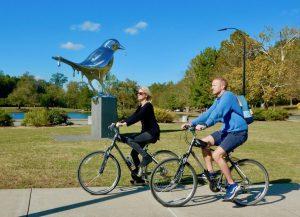 Birdwatching in Nashville
