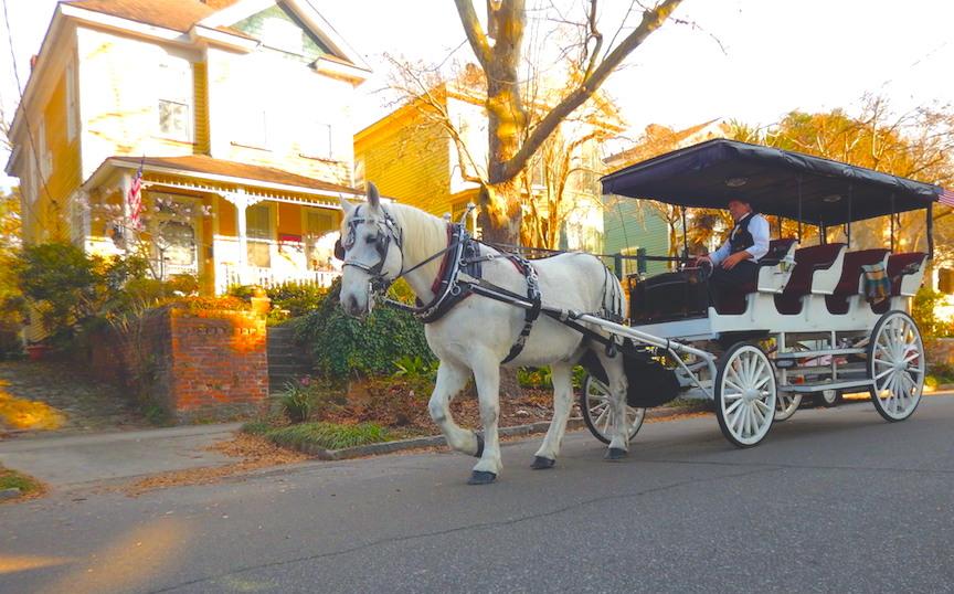 Explore Wilmington with Ben, the Rescue Horse